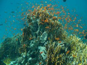 korallen3